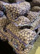 Картофель семенной, сорт Гала