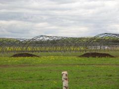 Sale of equipment Greenhouse complex 1 ha of closed ground