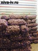 Selling ware potatoes wholesale and retail